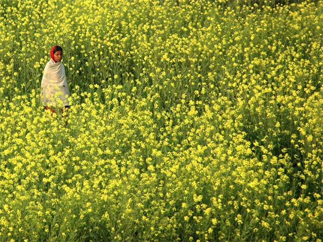 Agri-commodity: Refined soya oil, mustard seed, guar gum rise as demand picks up