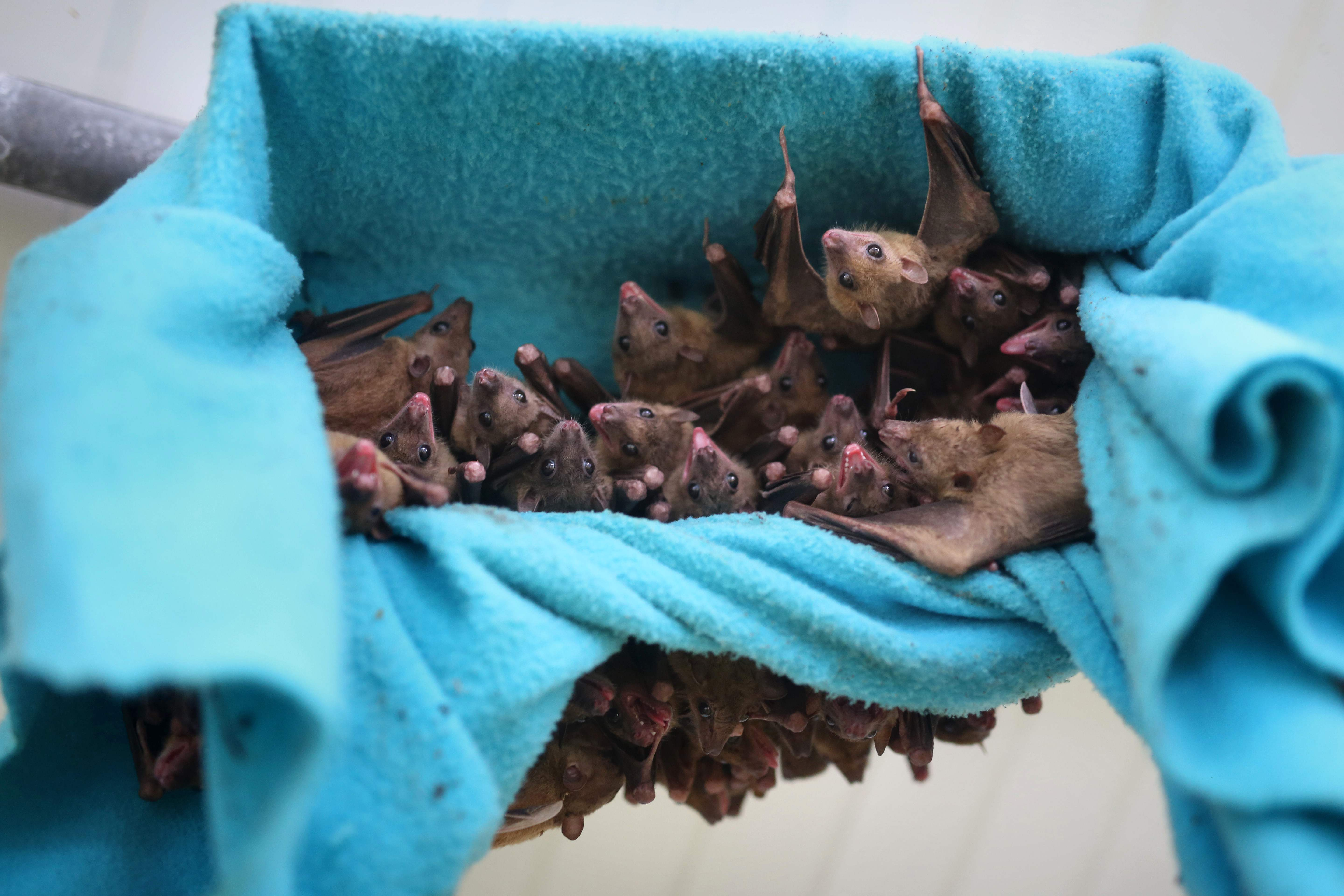 Stench of bat feces forces New Hampshire elementary school to close eight classrooms