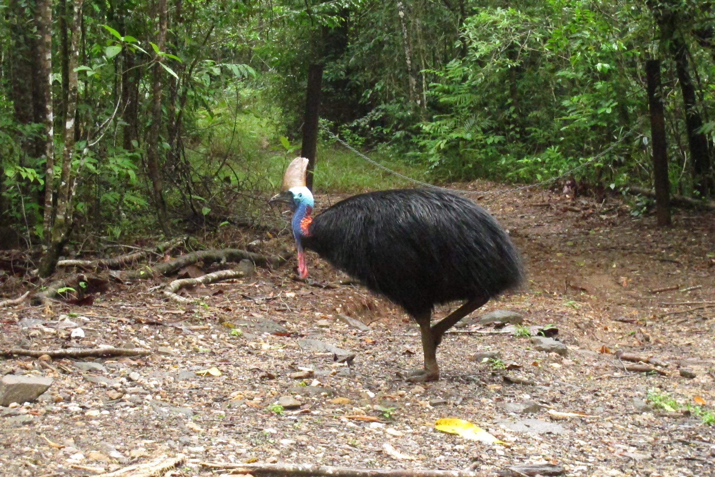 Florida man attacked and killed by his cassowary, the 'world's most dangerous bird'