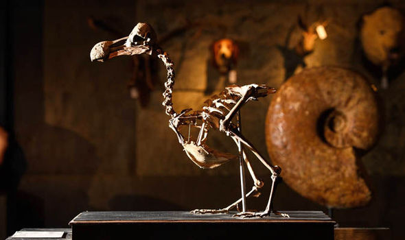 Dodo skeleton sells at auction for more than £320,000