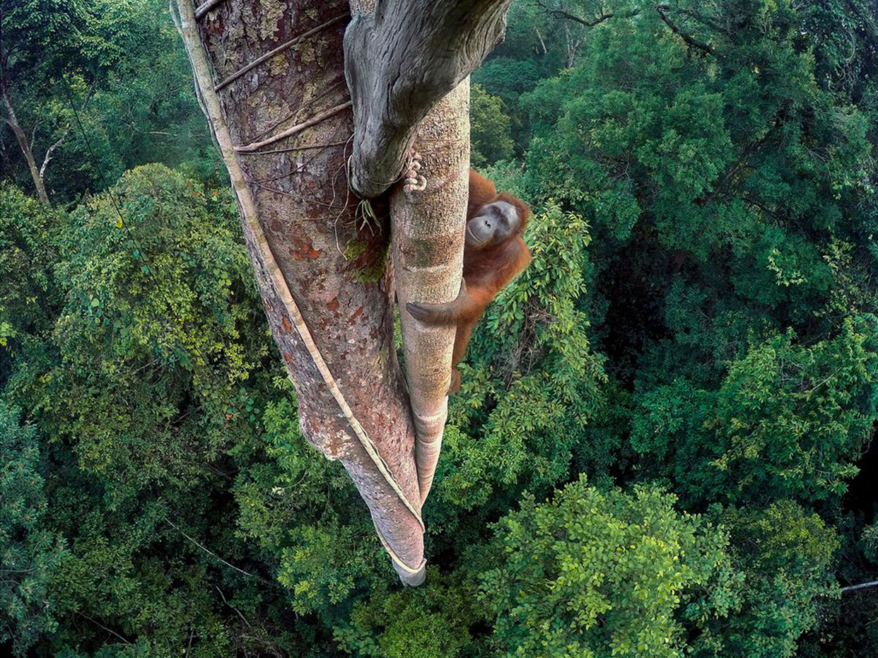 Wildlife Photographer of the Year 2016: Winners