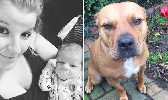Baby killed by family dog was snatched from his mother's arms, inquest hears