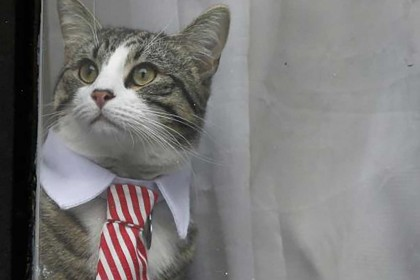 Julian Assange's cat spotted wearing a tie