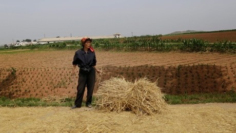 North Korea may be heading for food crisis, Red Cross warns as crops fail in hot weather