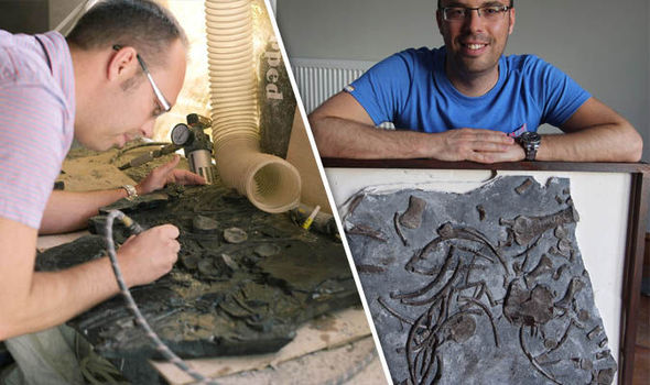 Painstaking! Man spends two years gluing together fossil after accidentally SMASHING it