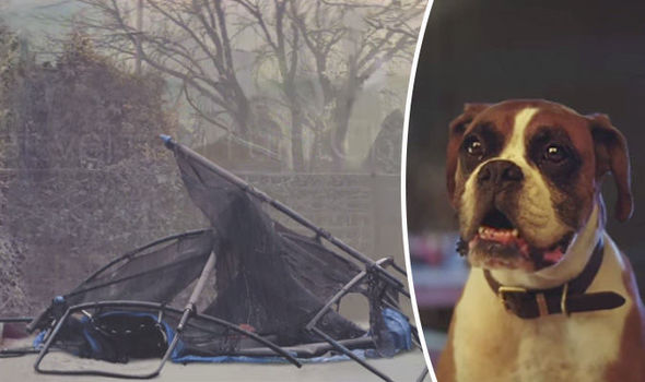 John Lewis Christmas advert parody leaves Buster the boxer missing out