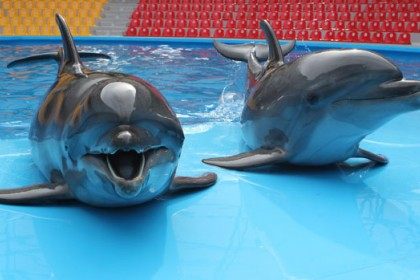 Ukraine's dolphin army in 'patriotic hunger strike' after Russian capture