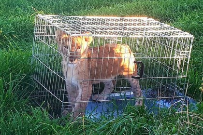 Jogger discovers abandoned lion cub in the Netherlands