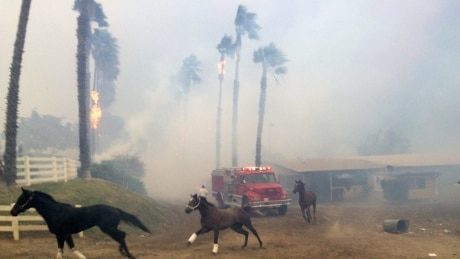 Some 25 racehorses killed in Southern California wildfire