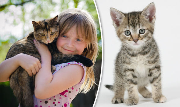 Can cuddling your cat kill you? Scientists warn pet owners