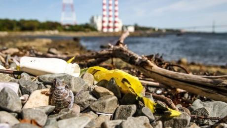 Dartmouth's Tufts Cove 'one of the dirtiest urban beaches I've encountered'