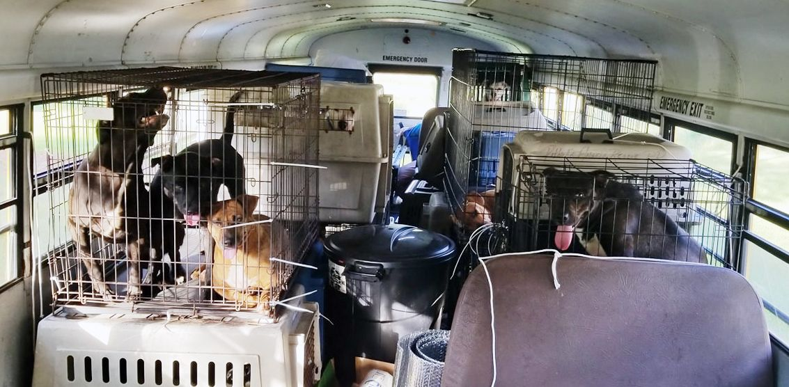 As Florence loomed, a pet lover escaped South Carolina with 64 dogs and cats on a school bus