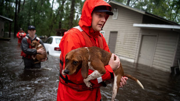 Coast Guard rescues boatful of Beagles from Florence flooding