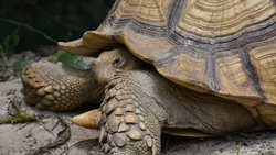 100-year-old tortoise stolen from NYC animal shelter